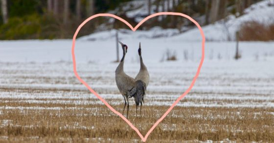 Fåglarnas kärleksliv